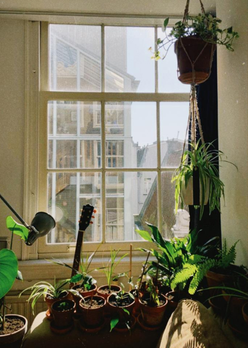 5 Practical Ideas for a Small Space Urban Jungle