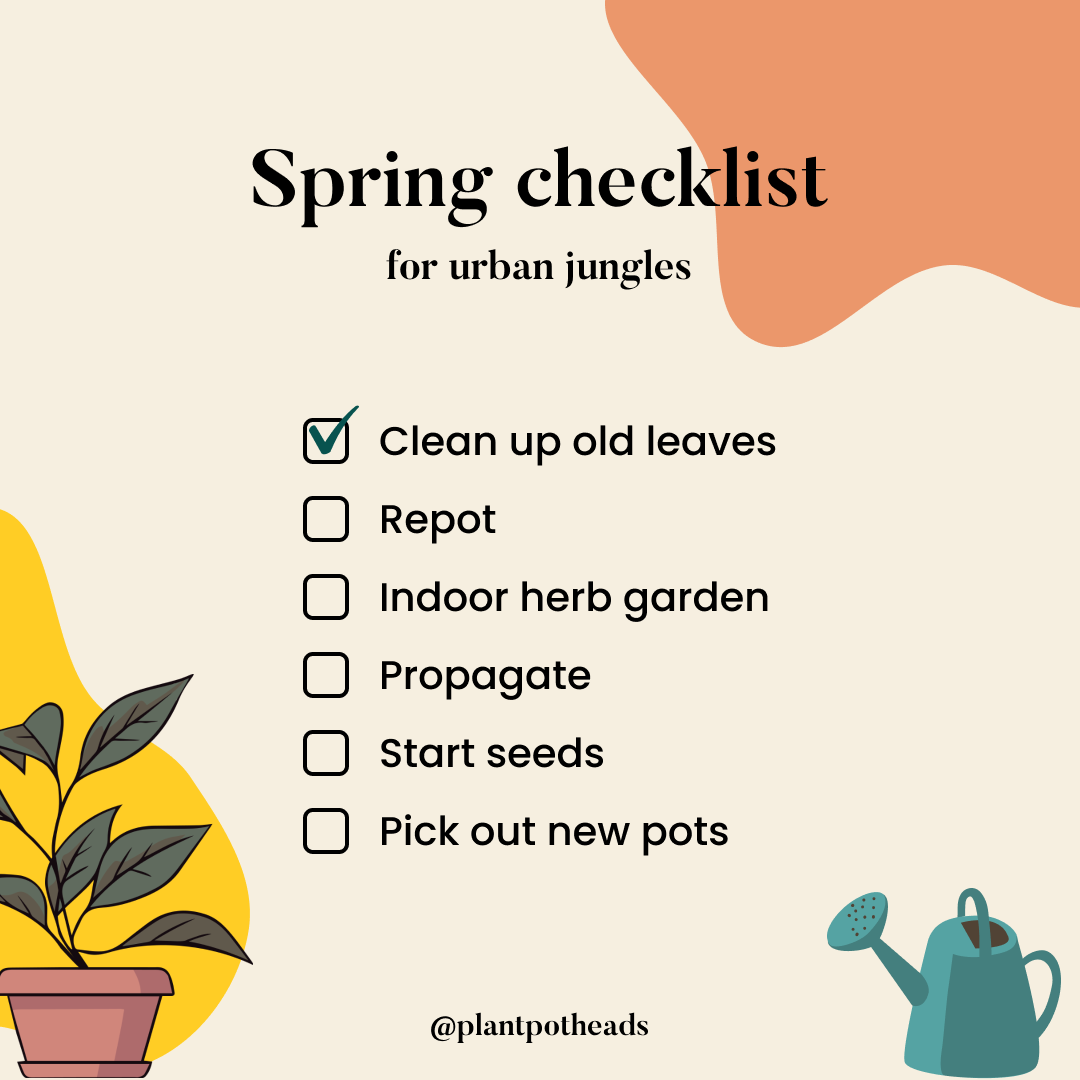Your Ultimate Urban Garden Spring Checklist
