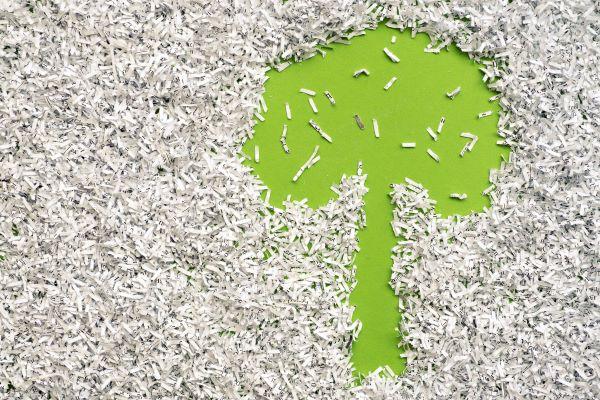 Outline of tree shape in shredded paper