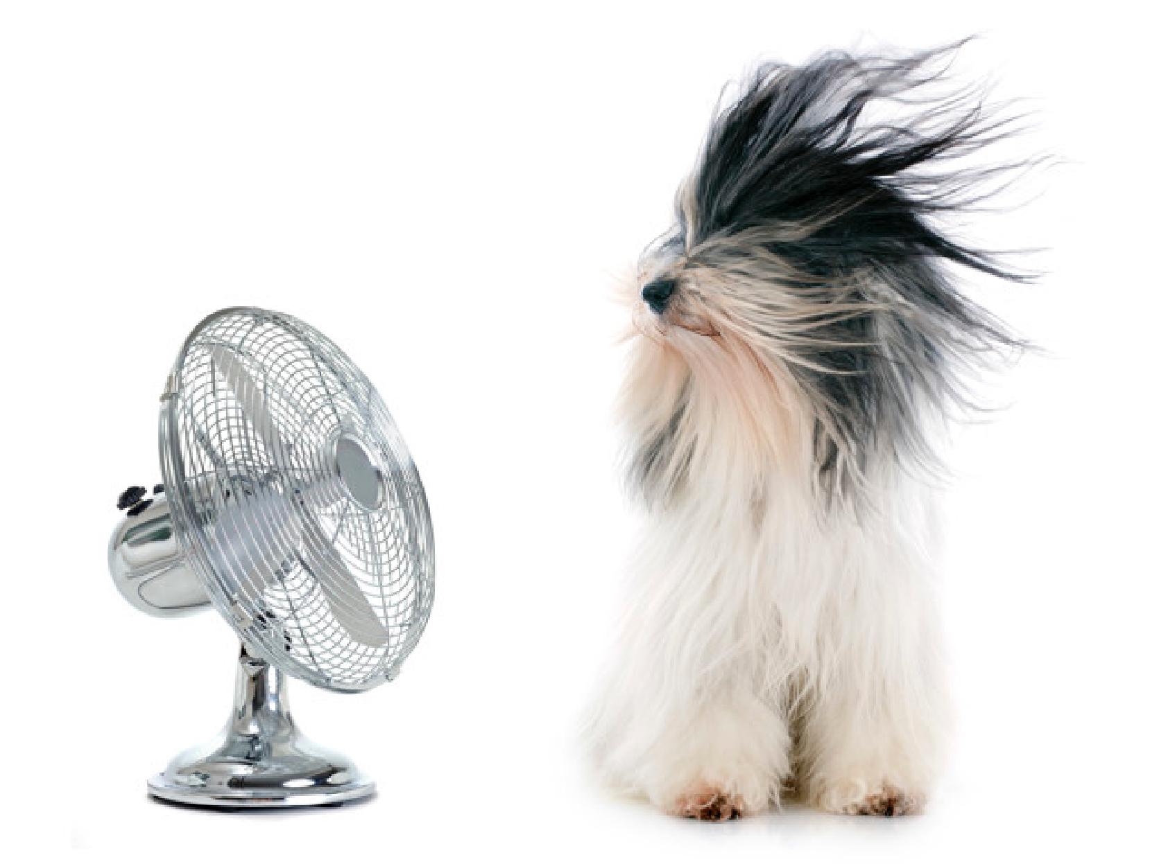 dog enjoying breeze from small fan