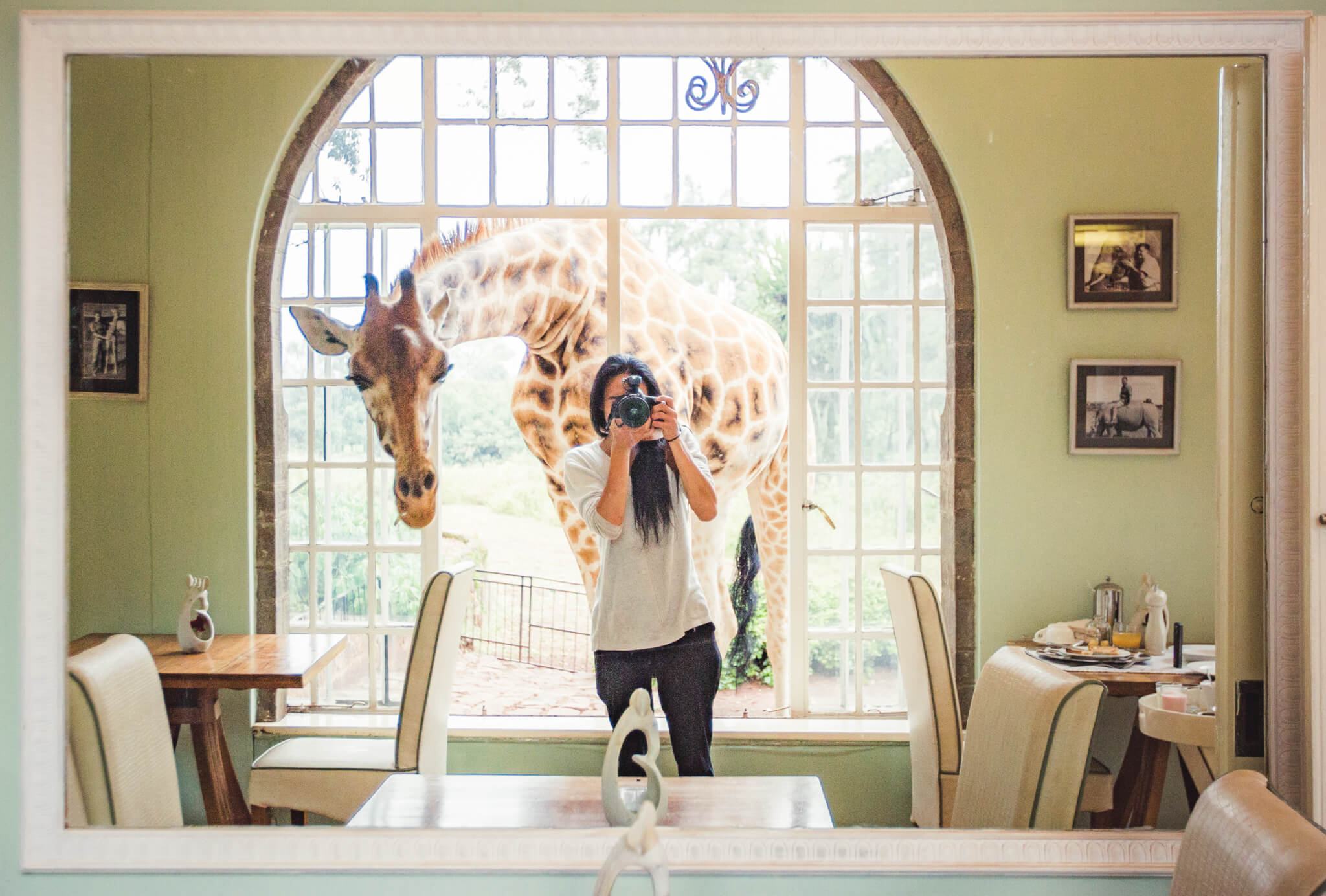 Person with camera and a giraffe through the window