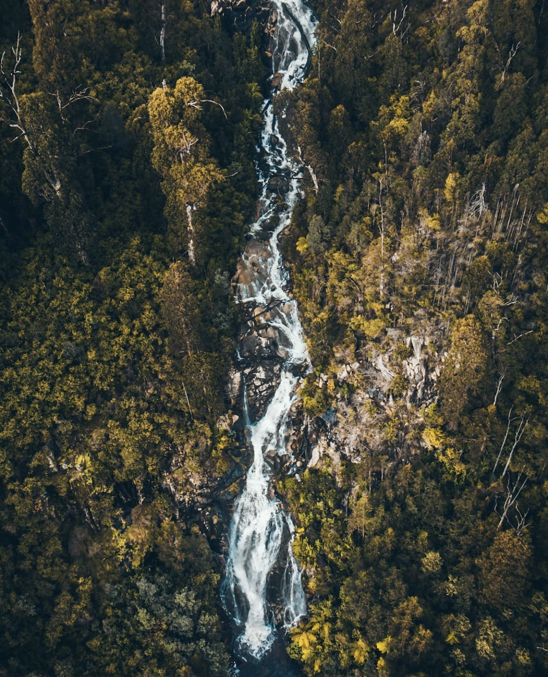 Travis Yarra Valley Guide - Steavenson Falls Trail