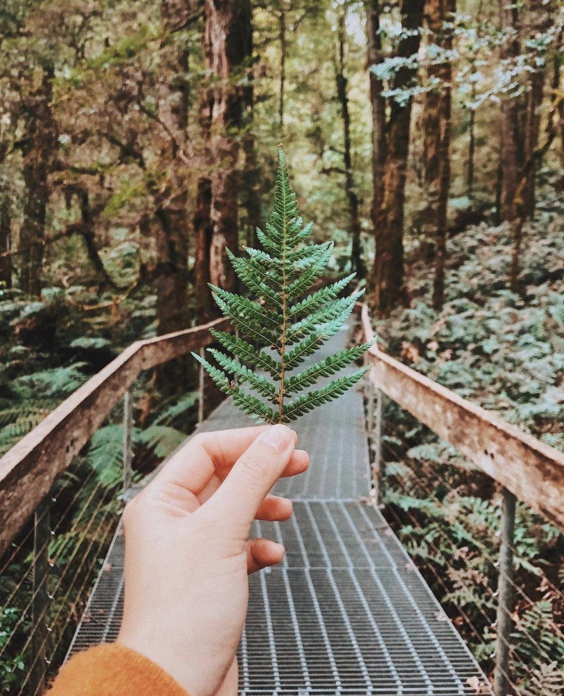 Travis Yarra Valley Guide - Mountain Ash Trees in Warburton Rainforest Galleryr