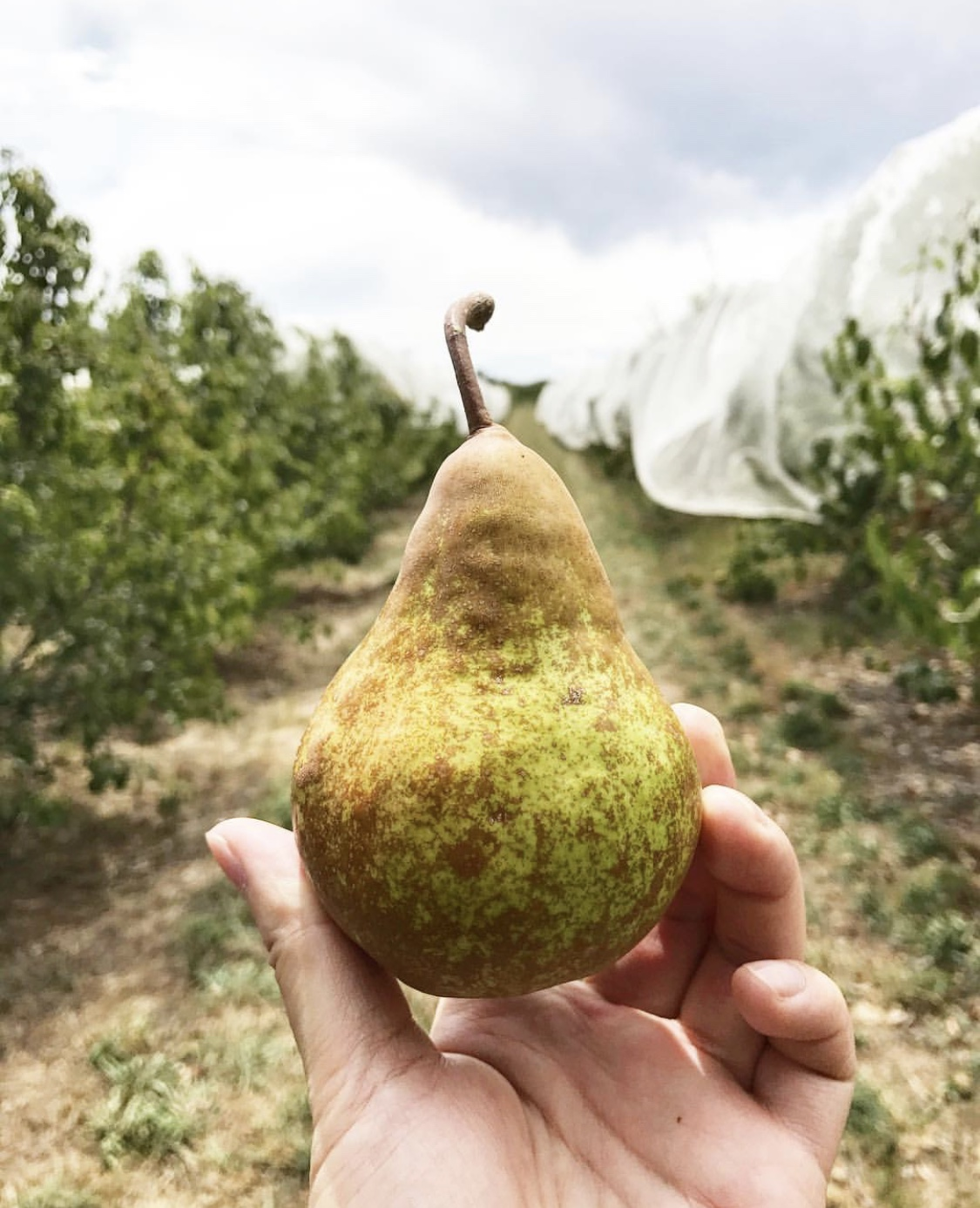 Thornbrook Orchard. #GoHyperlocal Guide to Orange NSW - Curated by Travis for your next Australian getaway