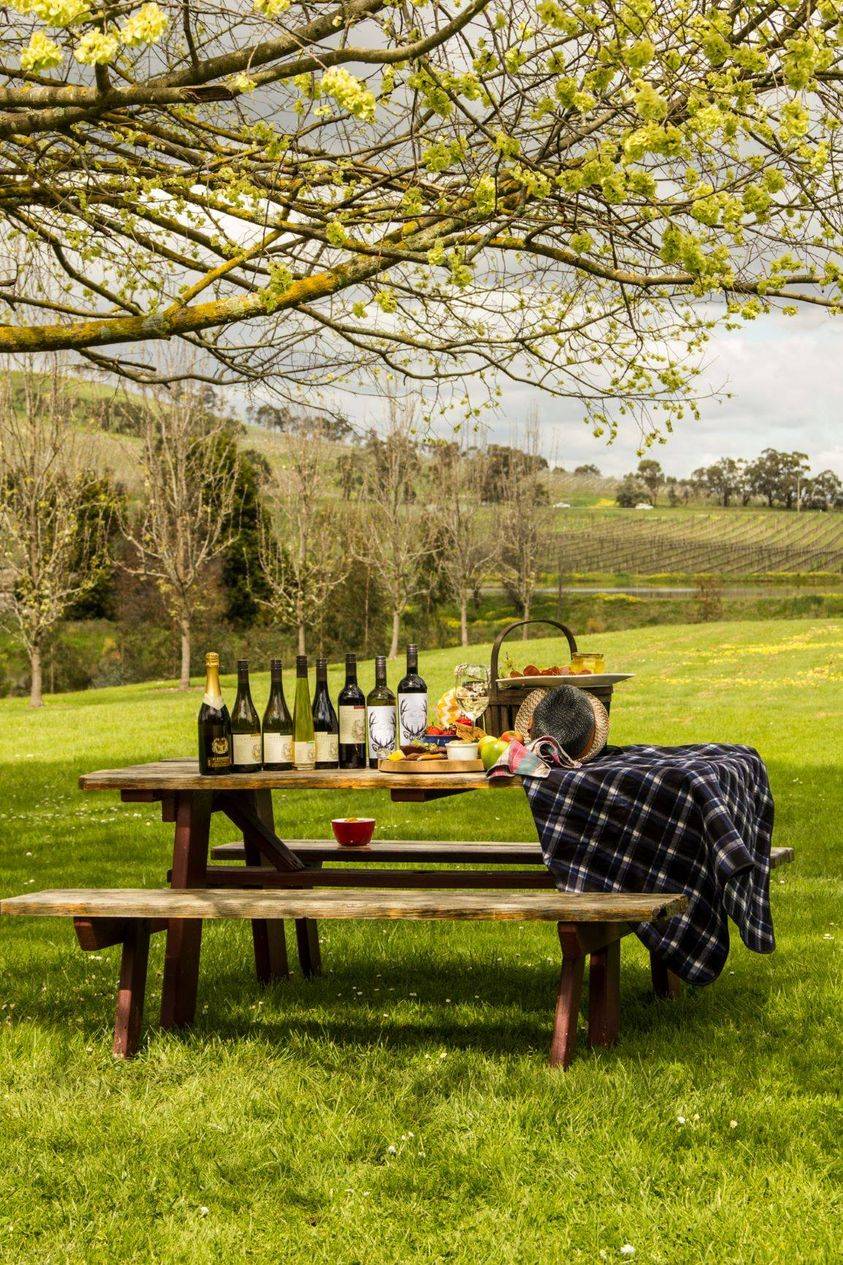 Travis Yarra Valley Guide - Yarra Valley Wine Tasting Tours