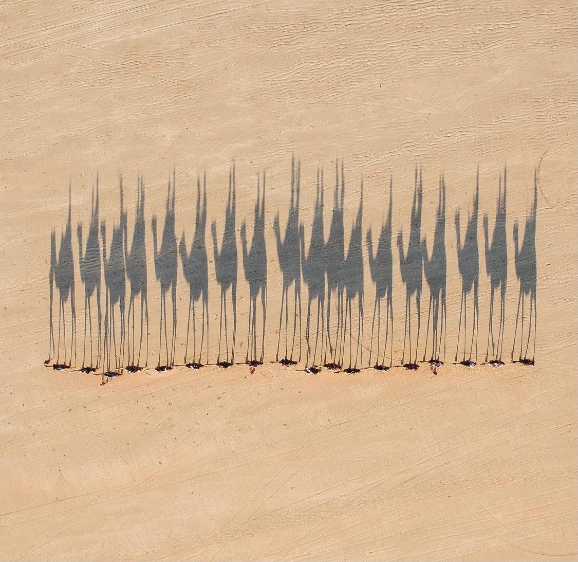 Camel shadows on sand by Jarrad Seng