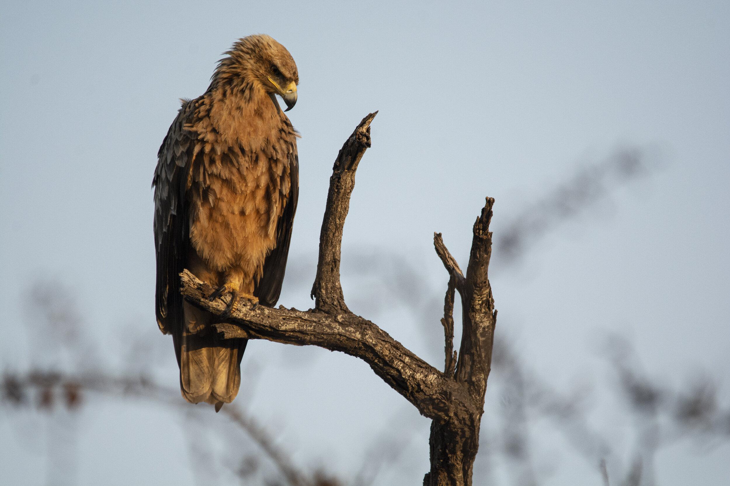 The Last Word Kitara bird life