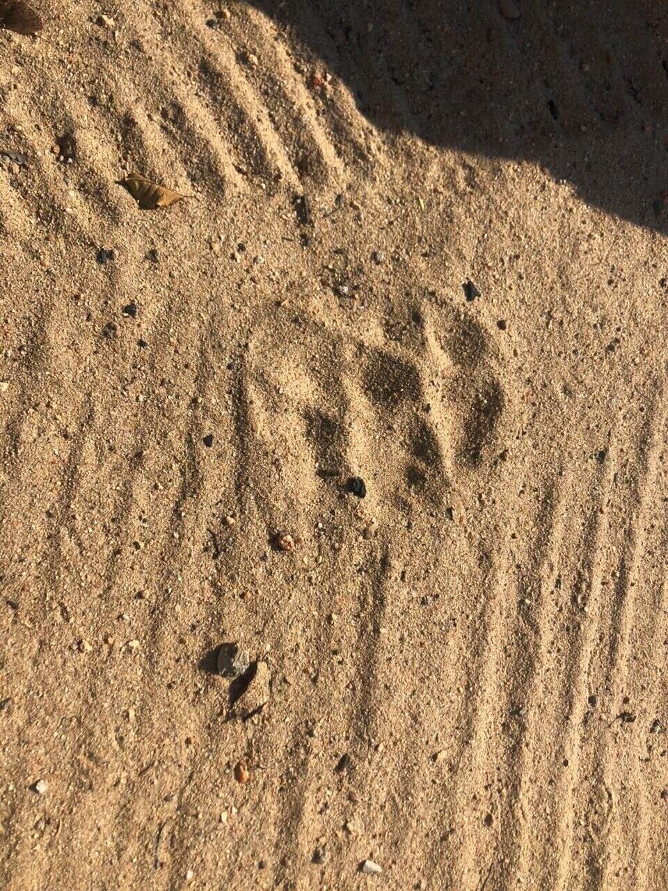 A leopard footprint at The Last Word Kitara.