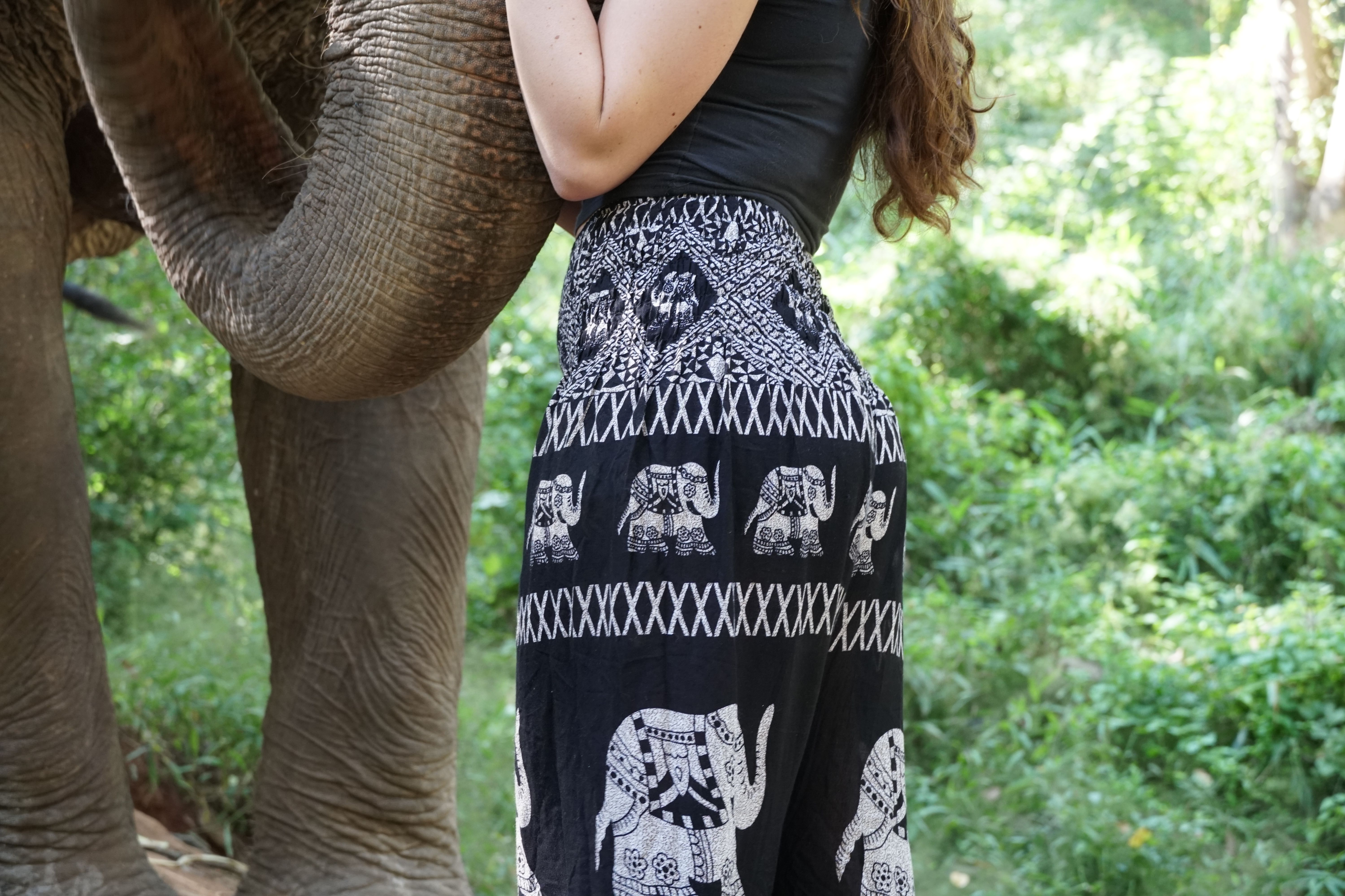 Elephant Pants With Elephant In Forest
