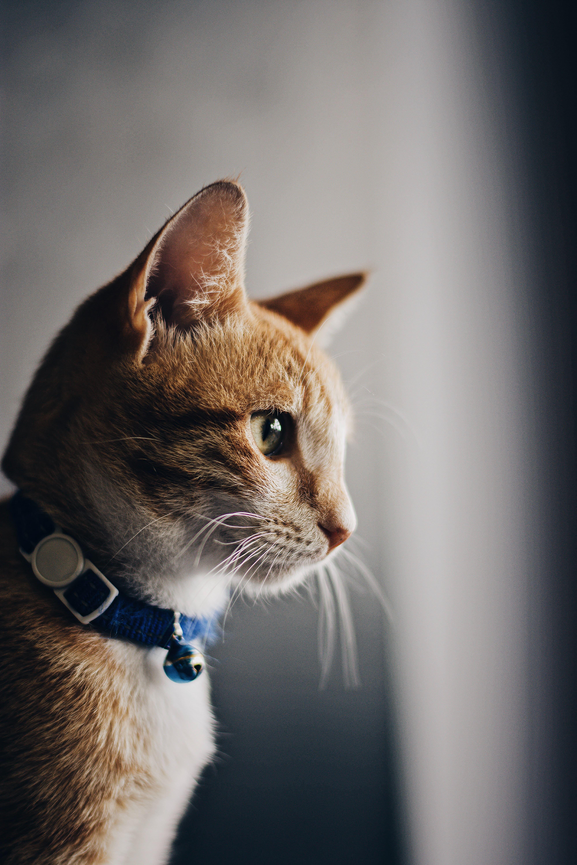 Image d'un chat qui s'appelle fifi