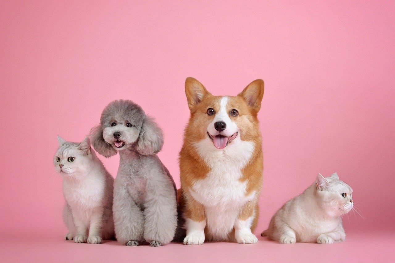 Image de chats et de chiens mignons sur fond rose