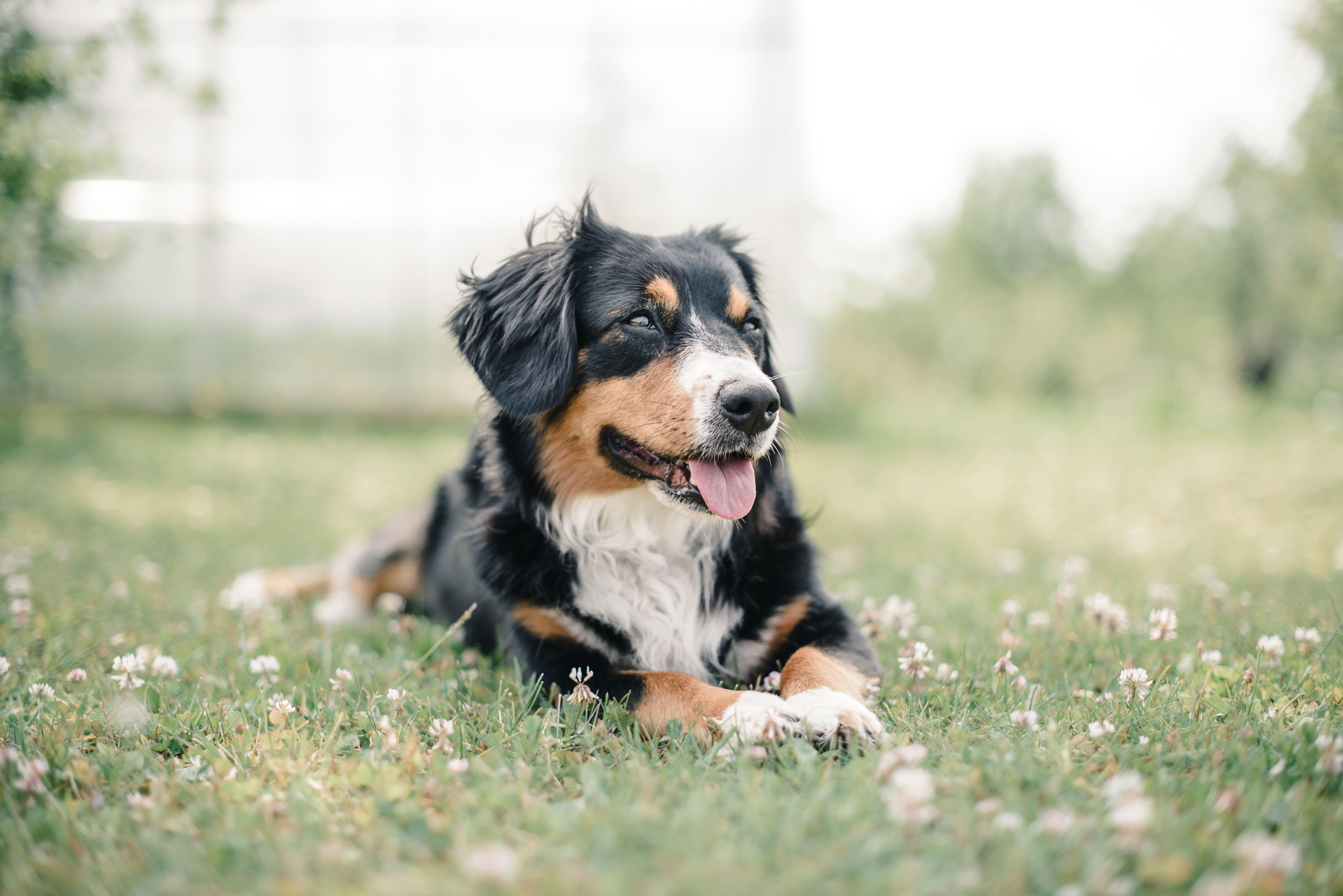 Image d'un chien qui s'appelle Archi