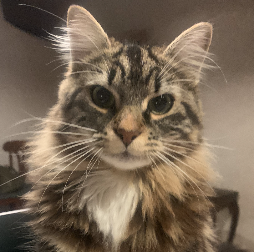 Image d'un chat qui s'appelle Talia