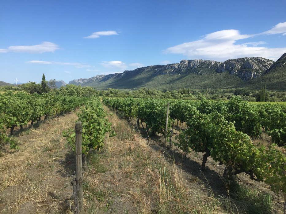 Vignes du domaine du Possible dans les Pyrénées-Orientales