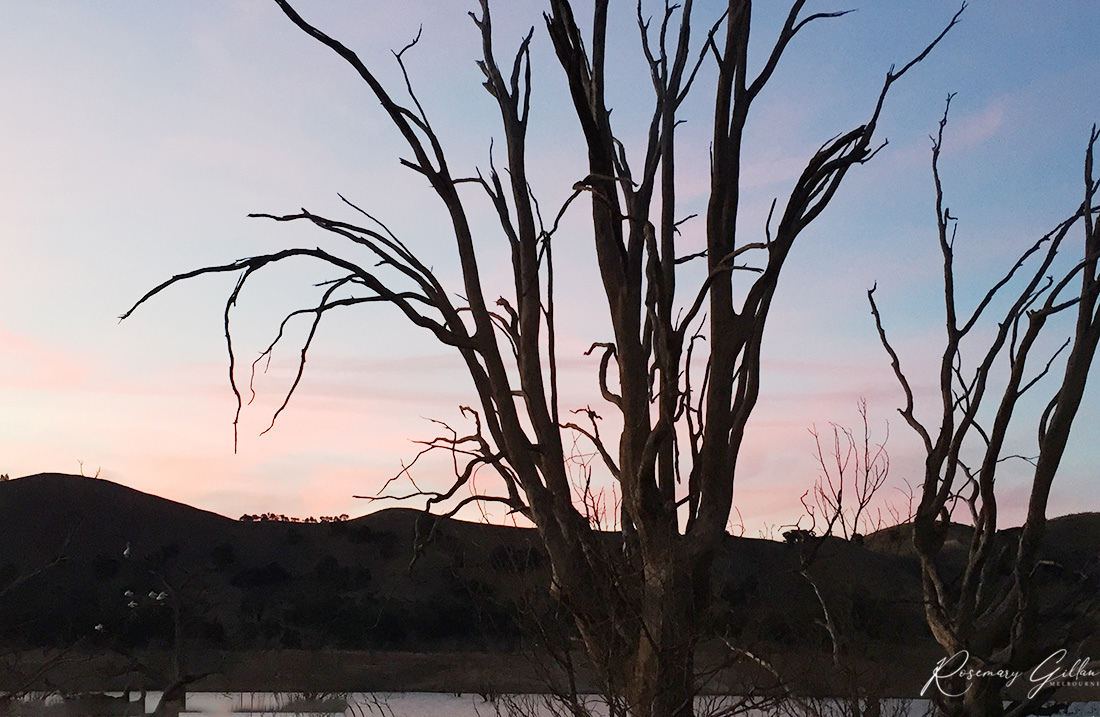 A pink and blue hued sky as the sun sets over Lake Eildon. Outline of two trees bare of leaves are in the foreground and gentle hills appear in the background
