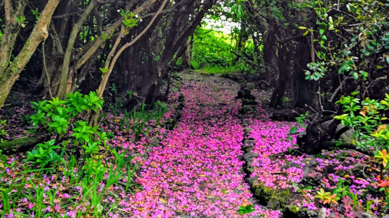 Cashel House Hotel Garden Pathway