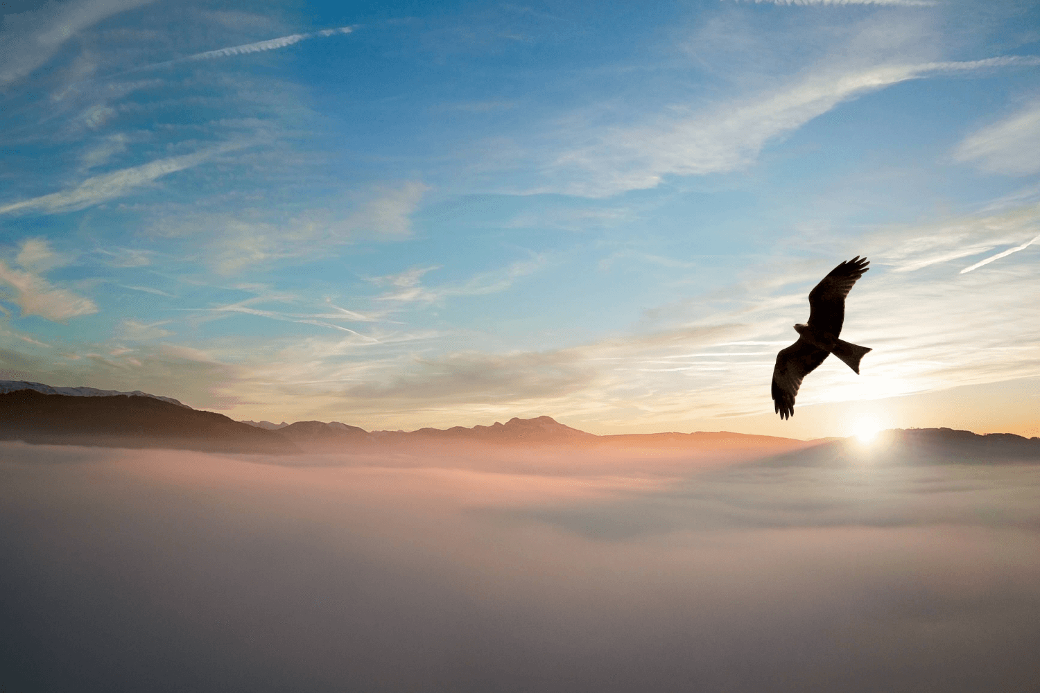 Bird flying above the clouds with sun in background