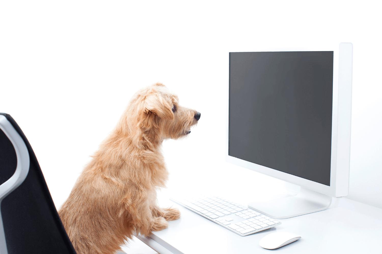 Dog at computer desk