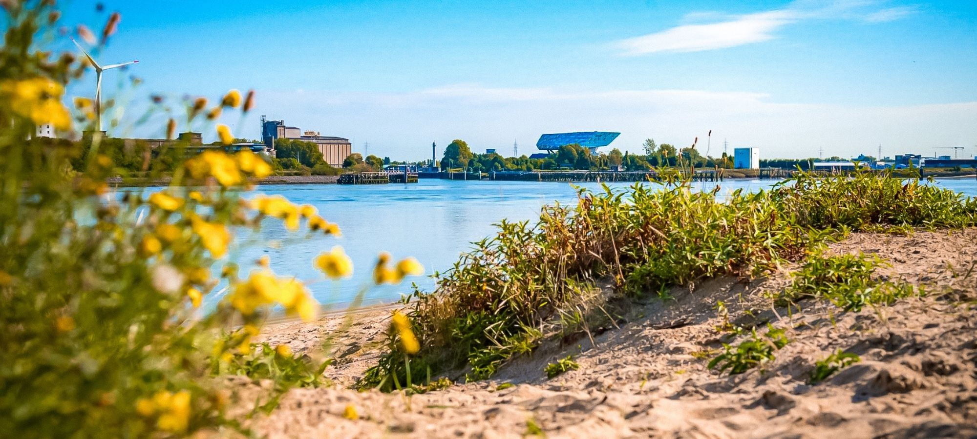 Small stretch of sandy beach, grass and yellow flowers. Across the river is the diamond Port House, Sint Annastrand, Antwerp