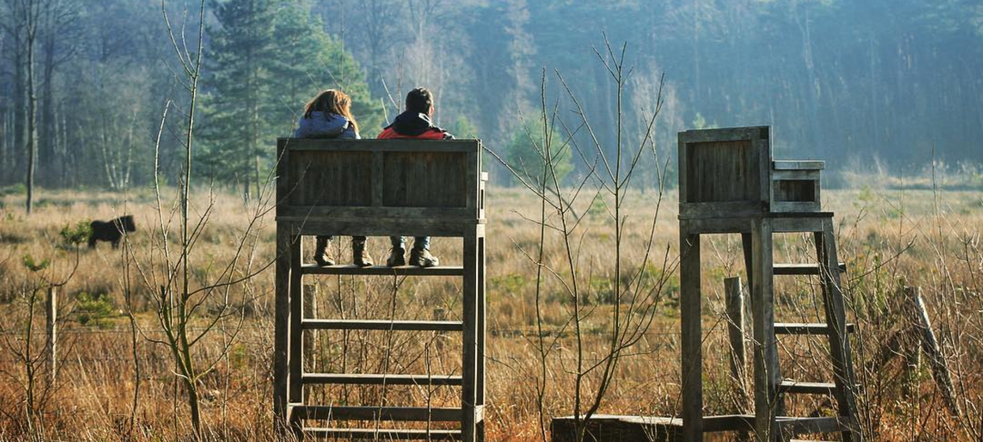 Two wooden lookout platforms rise above a grassy plain with tall trees in the background at Munsterbos nature reserve.