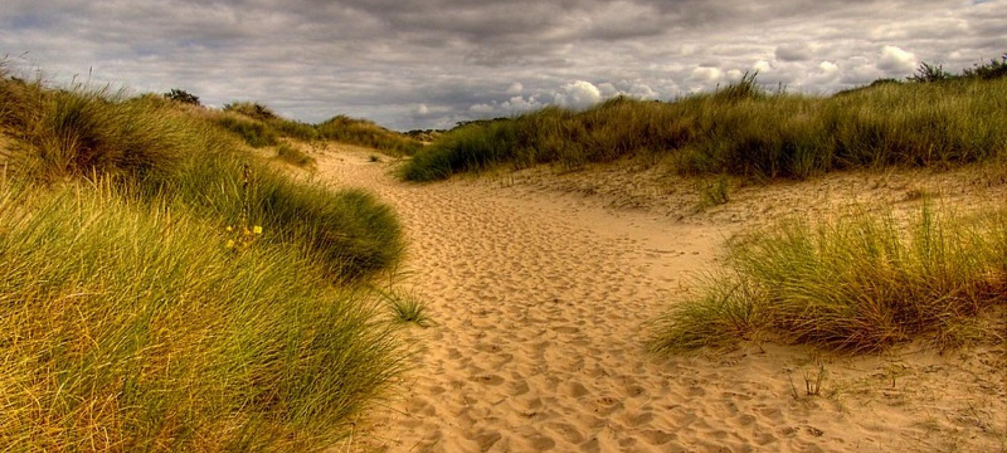 Sandy walking trail lined by grassy reed plants near De Panne beach in Nature Reserve of Westhoek, Belgium