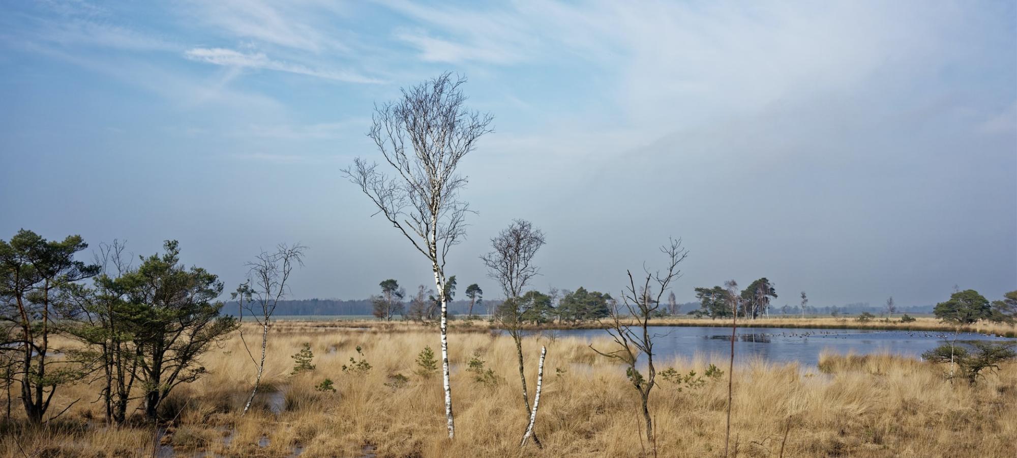 Barren landscape of Kalmthoudse Heide, Antwerp, Belgium