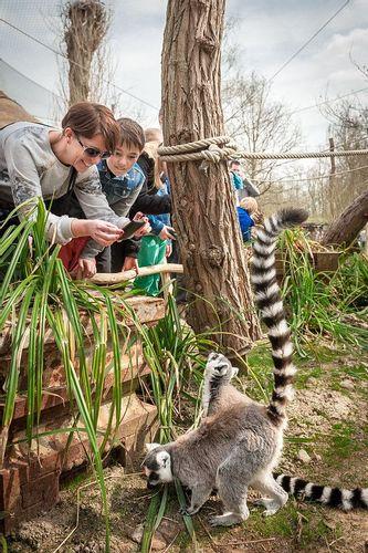 Planckendael Zoo