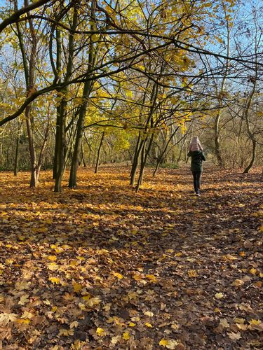 Saint Anna Forest