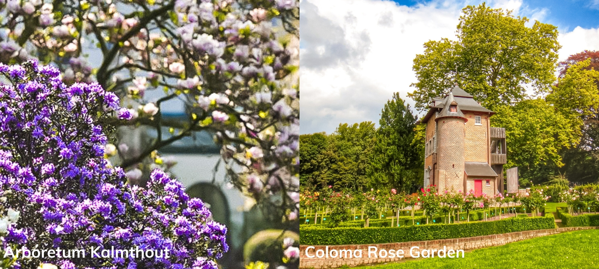 Left: flowers in a nature reserve. Right: rose garden, Brussels