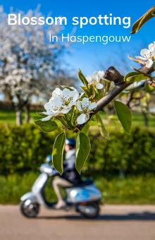 blossomspotting