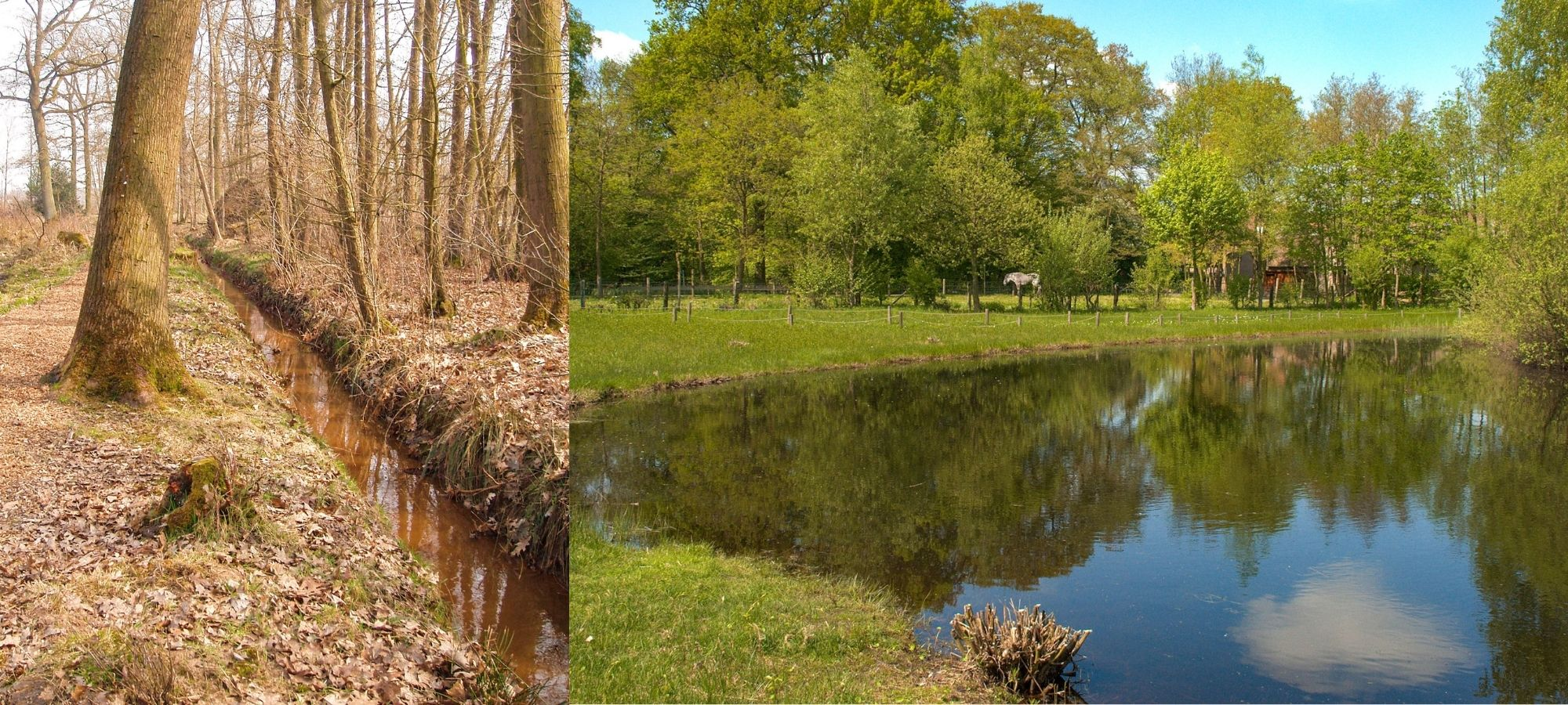 Left: trees next to a narrow river. Right: lake in Domein Kiewit, Belgium