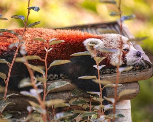 The best places to see animals in Belgium