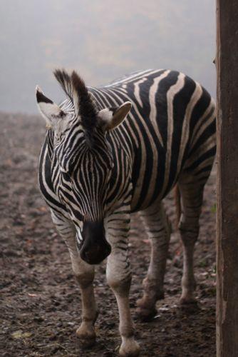 Animal Park Bouillon