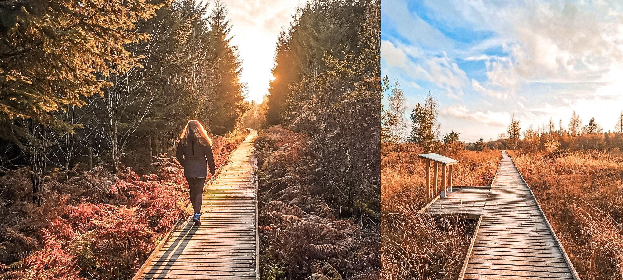 Woman walking on a wooden pathway on the Plateau des Tailes, Belgium