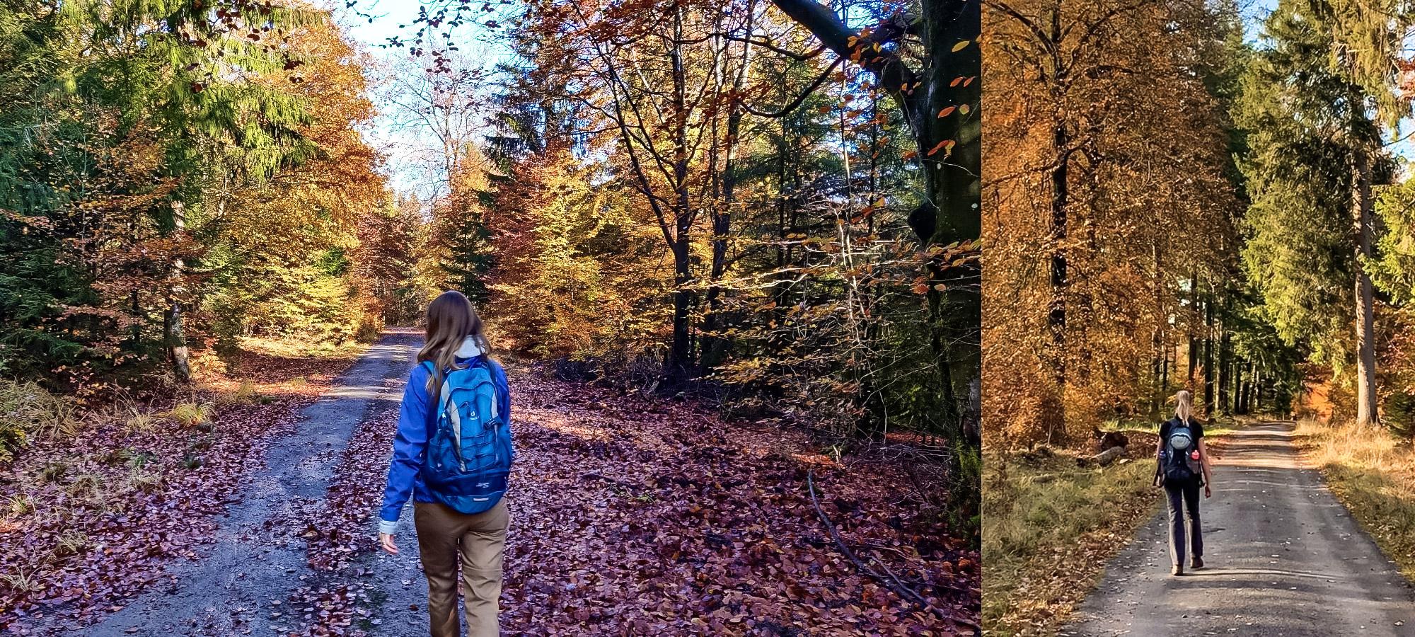 Trekker hiking through a forest, Belgium
