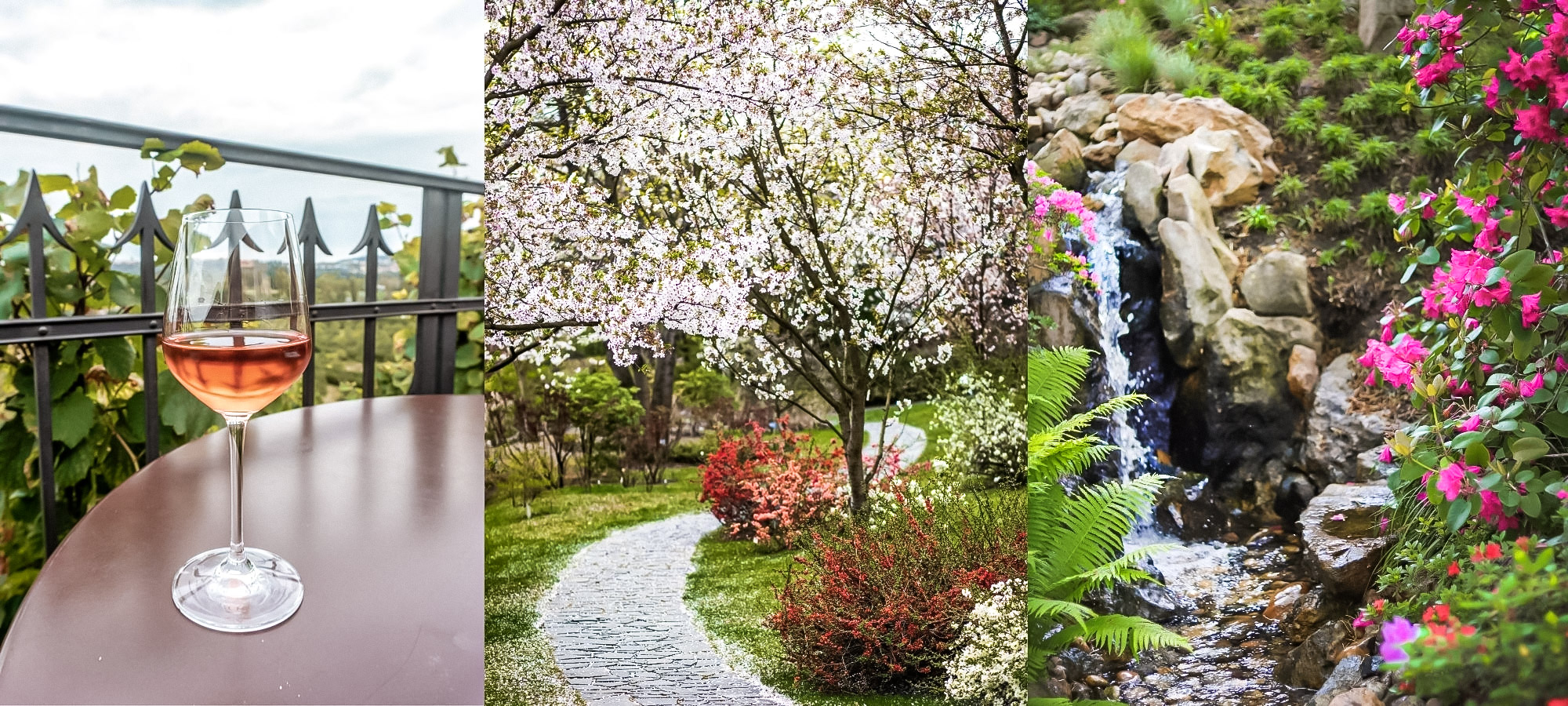 A wine glass on a table, cherry blossom trees and a mini waterfall in Prague