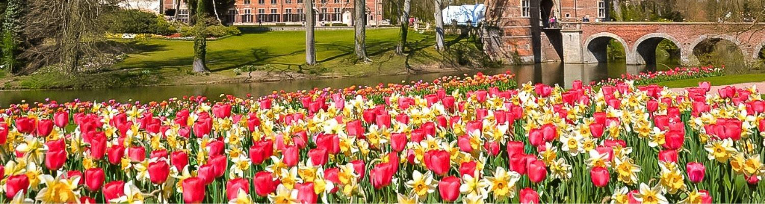 Fantastic flower gardens to see this spring in Belgium