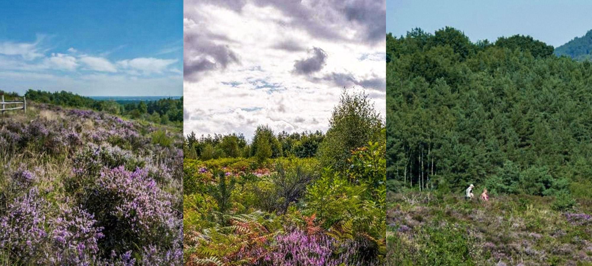 Woodlands and heathland in Mechelse, Belgium