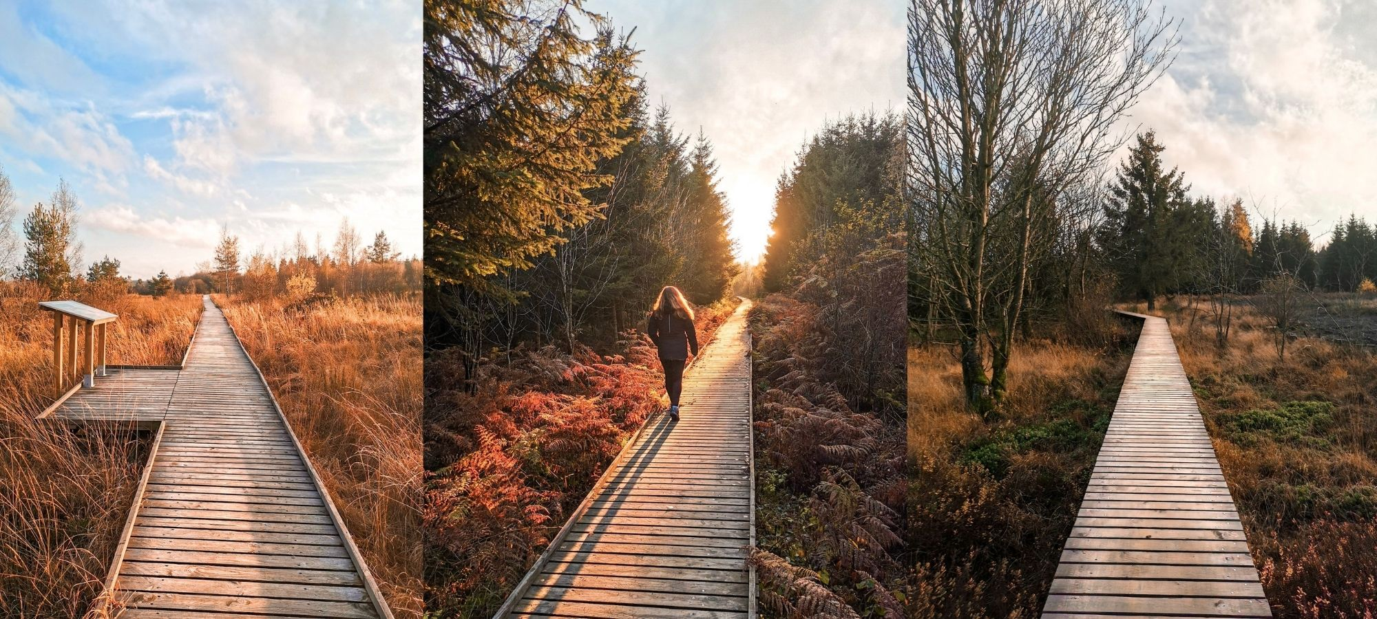 Woman walking on a wooden walkway ong Fagne Sacrawe in the autumn