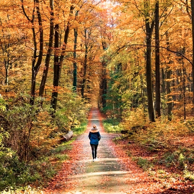 Woman walking through the Sonian Forest in autumn.