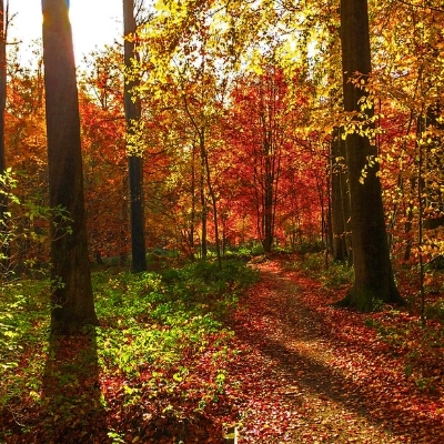 The Sonian Forest in Belgium during autumn, Brussels