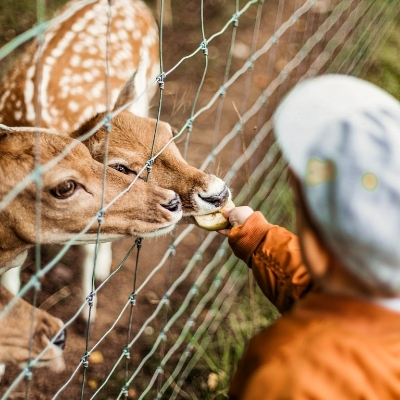 Child feeding deer at the zoo