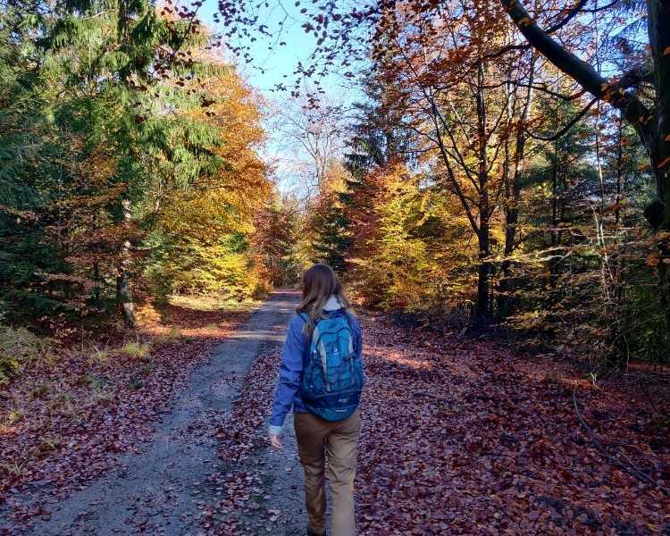 The Best 20 Autumn Hikes in Belgium 2021
