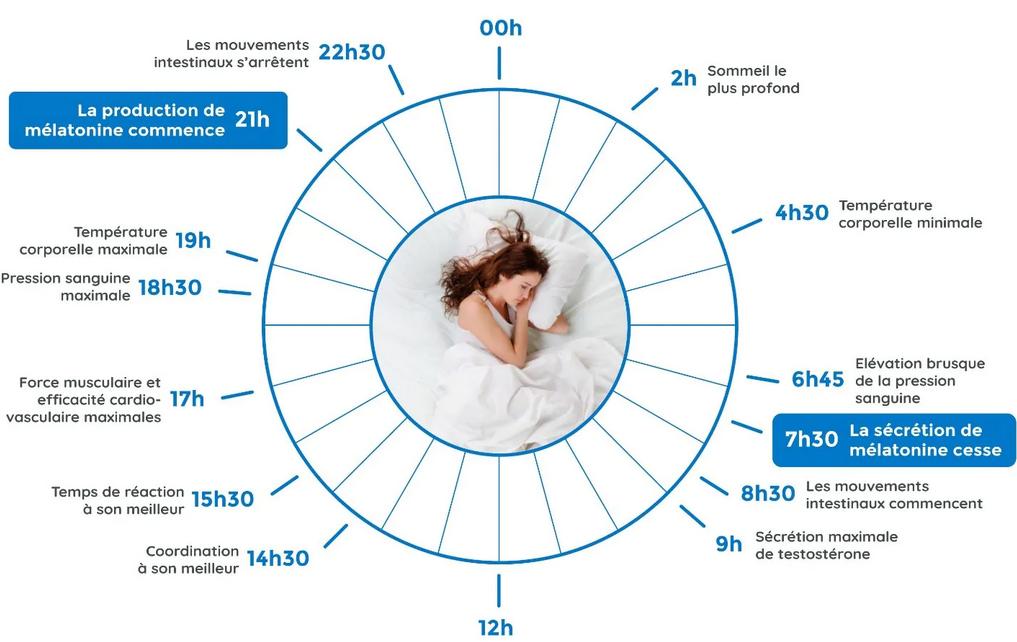 Schéma explicatif du rythme circadien