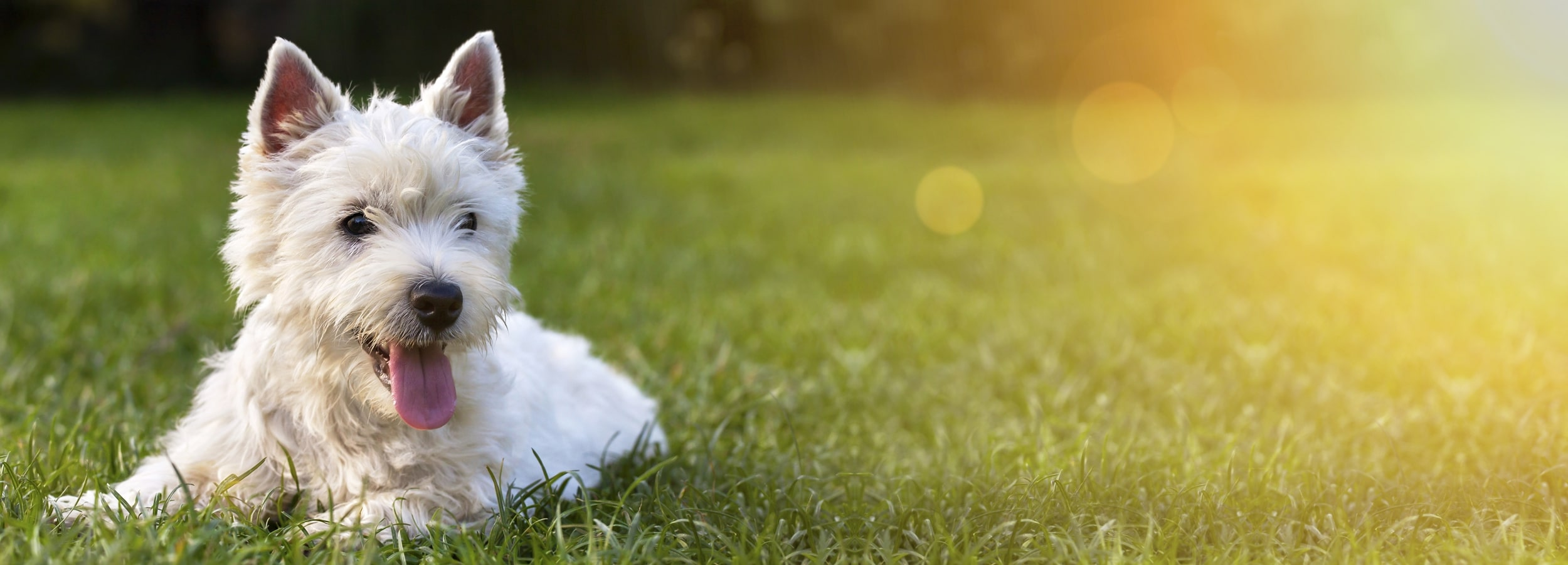 A dog resting on the grass