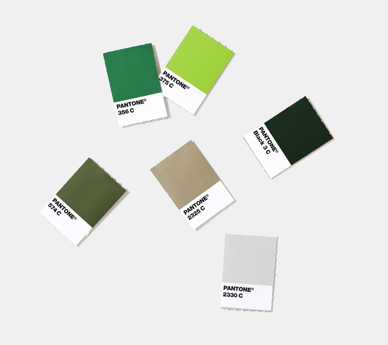 Texas Original Cannabis Company Color Palette Development by High Road Design Studio