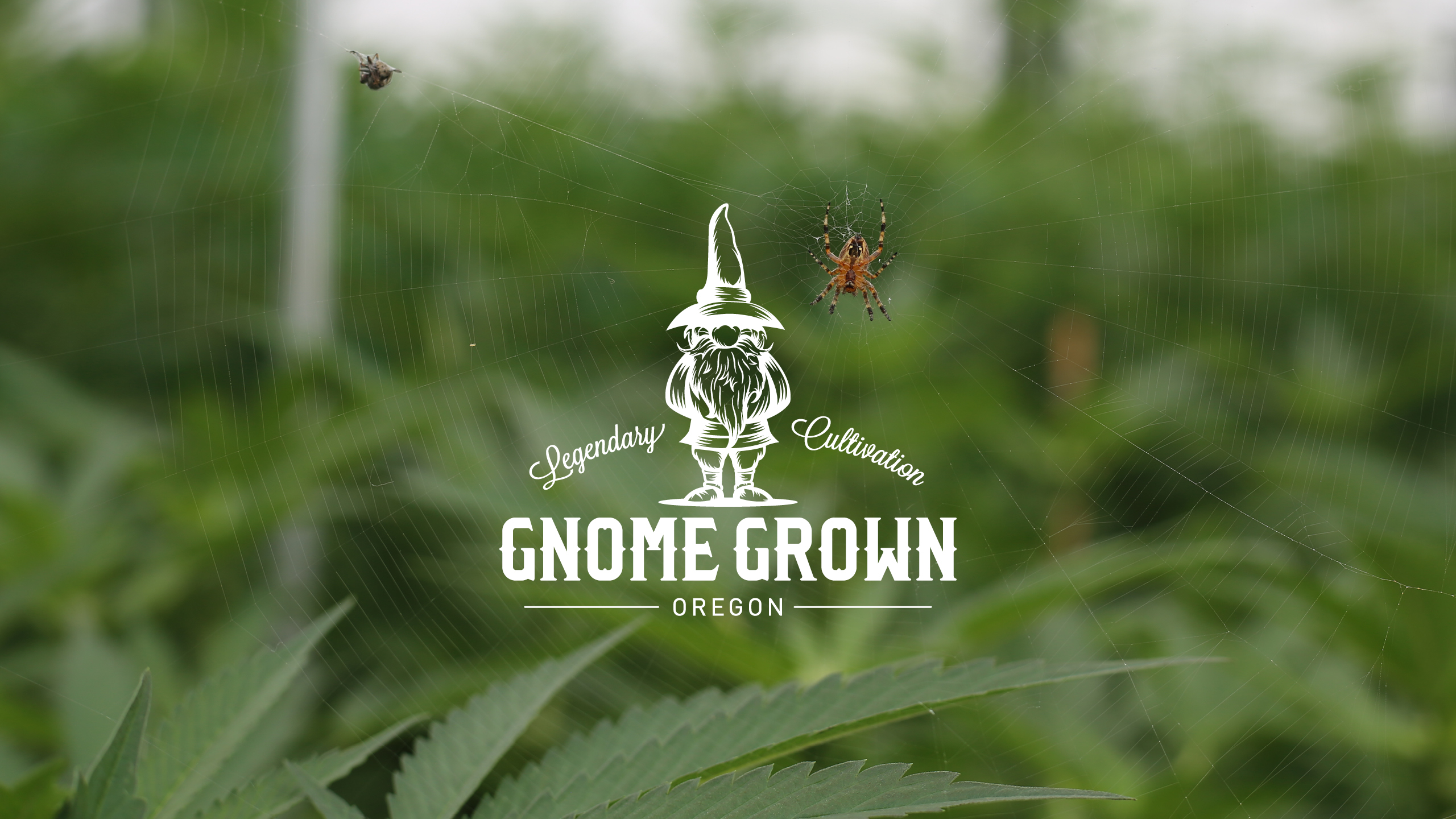 Gnome Grown Brand Identity Logo by High Road Design Studio