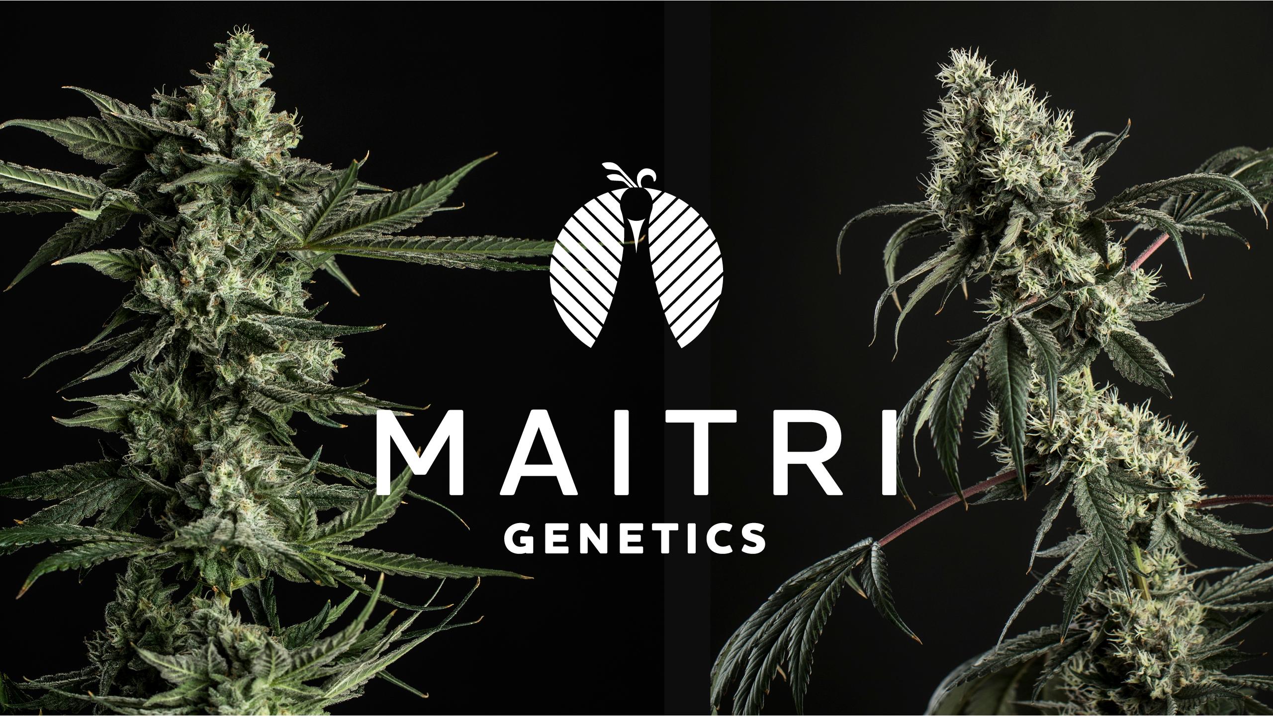 Maitri Genetics Brand Identity & Logo Creation by High Road Design Studio