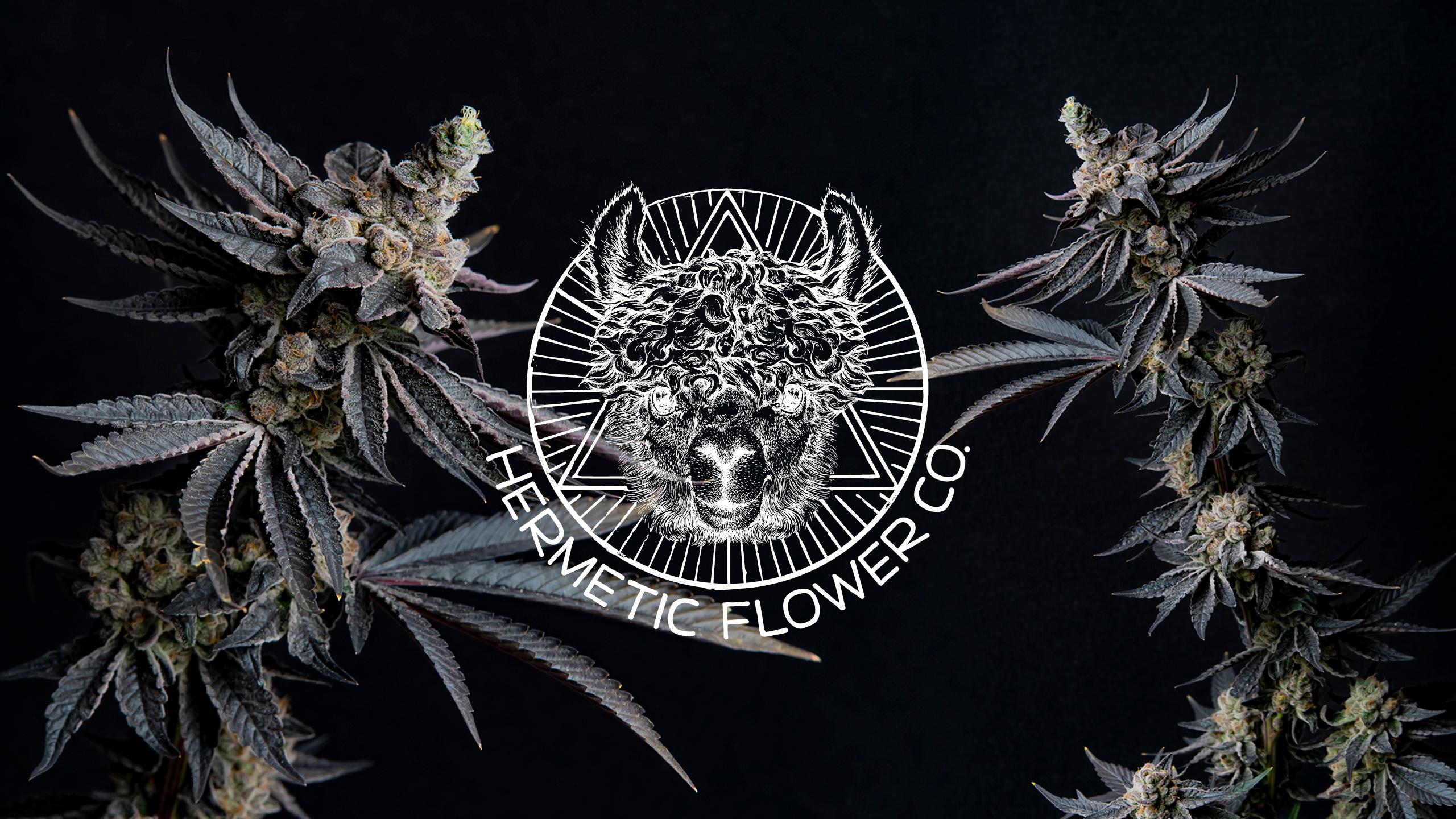 Hermetic Flower Company Brand Identity & Logo Creation by High Road Design Studio