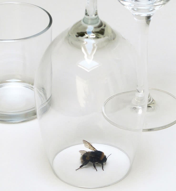 peter de meyer, installation bumblebee, one out of three glasses, art as a confrontation between nature and culture